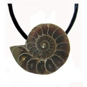 Ammonit Fossil Anhänger gebohrt mit Band & Zertifikat